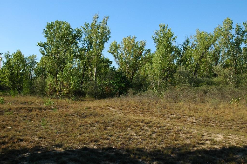 A védett terület nyílt homoki gyepének látképe