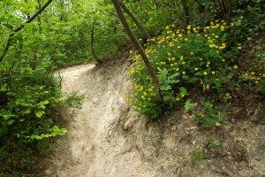 A sétautak közvetlen közelében olyan ritka fajok élnek, mint a sárga koronafürt