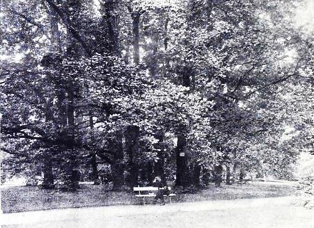Arany tölgyek, 1905 (527)