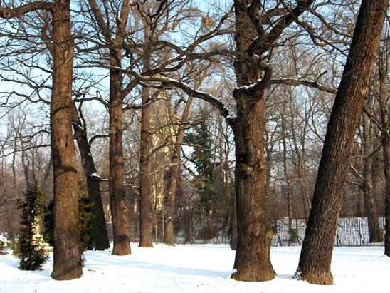Az Arany János tölgyei – facsoport 1883-ban még 39 fát alkotott. A facsoportból még napjainkban megtalálható 7 példányt láthatjuk, 2010. január (1)