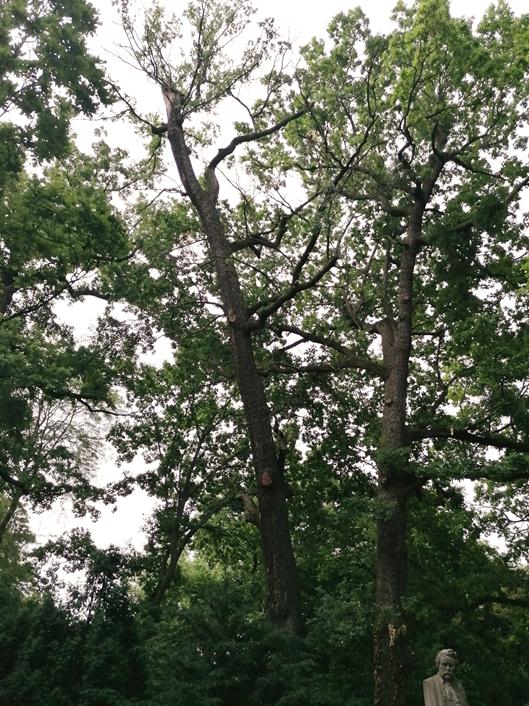 A szobor mellett, a bal oldali száradóban lévő fa, 2020 június (1)