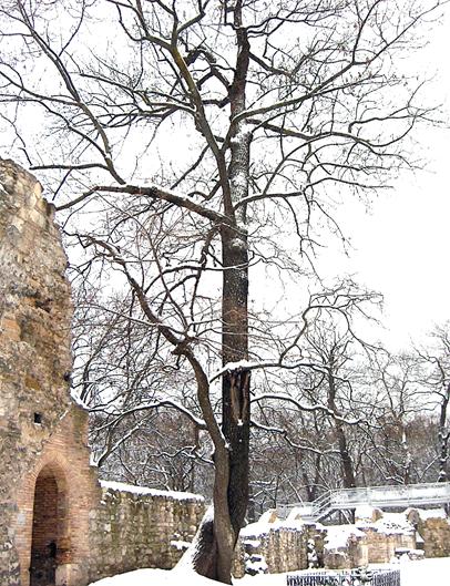 A fapáros a Romkertben, 2010 (1)