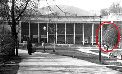 A nevezetes Hétvezér platán a Palatinus Strand főbejáratával szemben, 1957 (85)