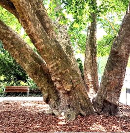 A 2017-ben kialakított új fahely (1)
