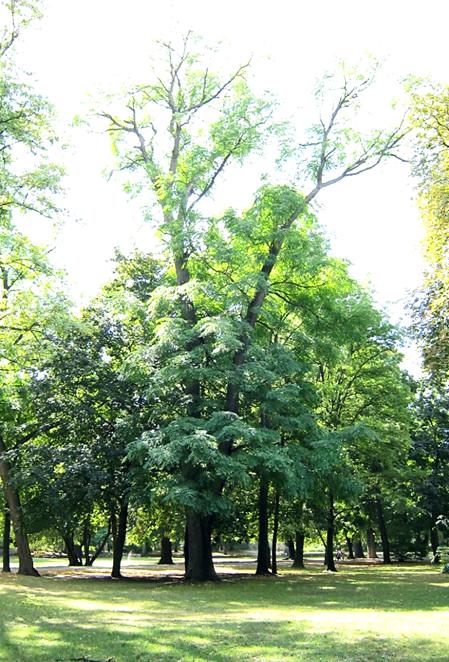 A nevezetes vasfa, 2012 nyarán (1)