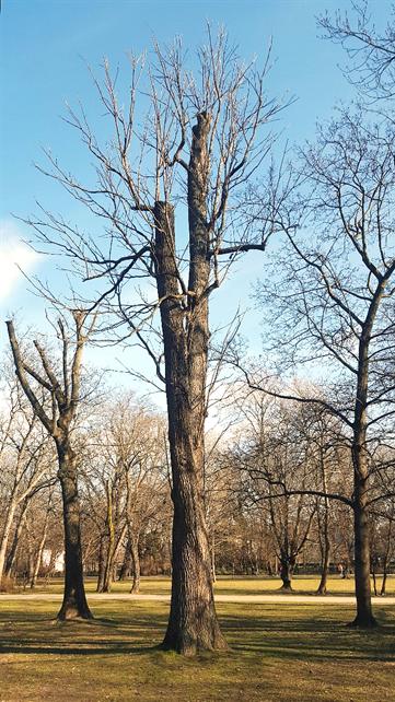 A nevezetes vasfa, 2020 február (1)