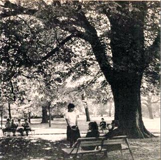 Pihenő a fa árnyékában, 1969 (96)