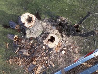 Odvas vázágak a fán, felülnézetből, 2020 február (100)