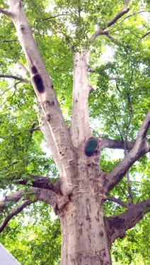 A fa korona-alapja, 2016 (1)