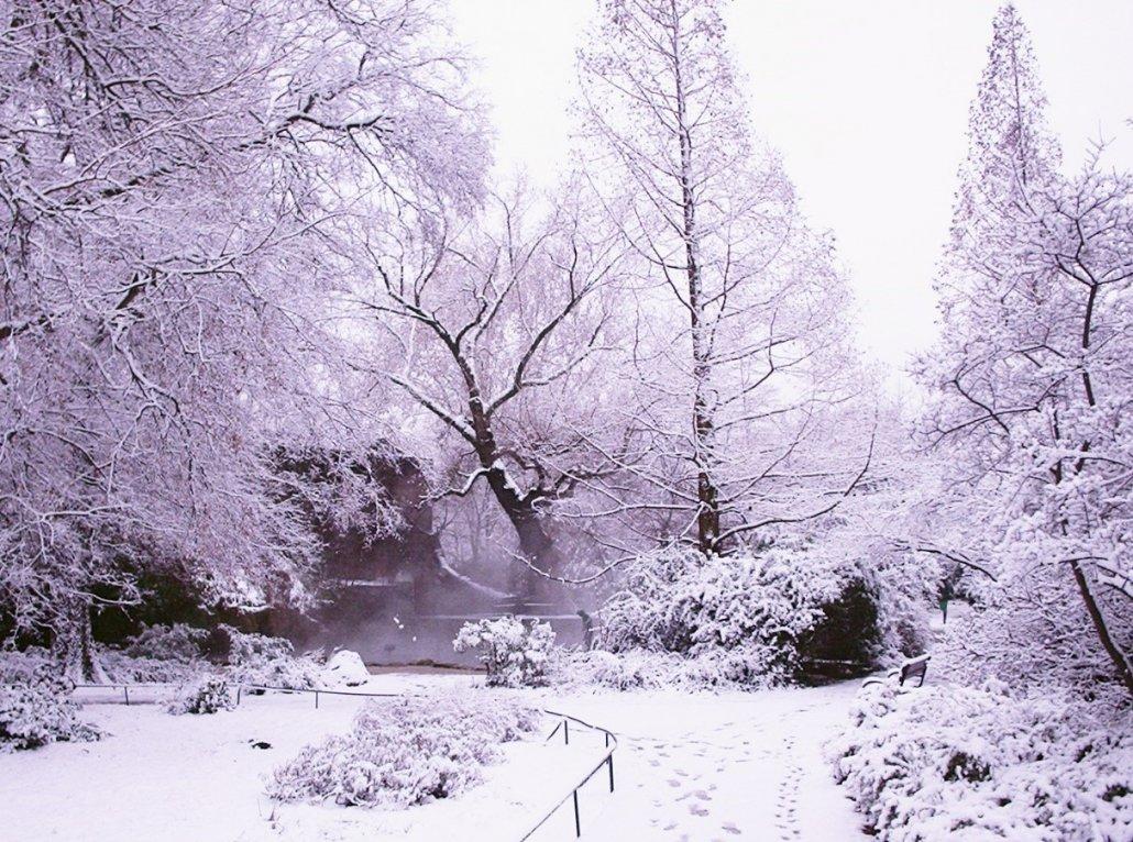 A télbe öltözött Japánkertet láthatjuk. A háttérben egy-egy kínai ős-mamutfenyő emelkedik ki, jellemzően szabályos koronájával, 2004 december (1)
