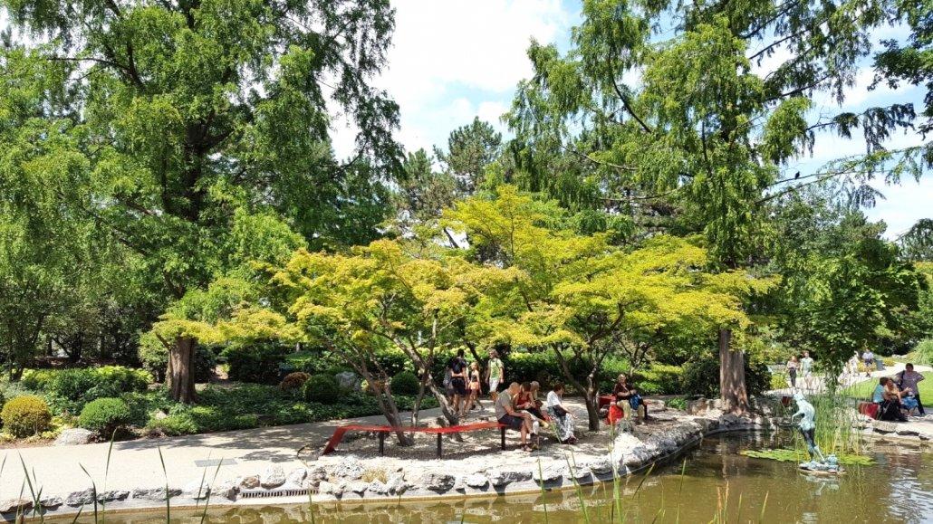 A 2016-ban felújított Japánkertben, közvetlenül a felső-tó mellett pompázó nevezetes japánjuharok, 2017 július (1)