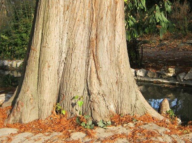 A nevezetes fa törzse (1)