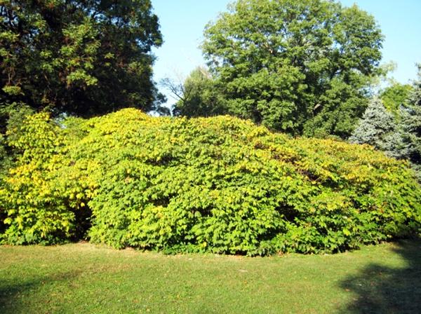 Megkapó októberi lombszíne, 2012 (1)