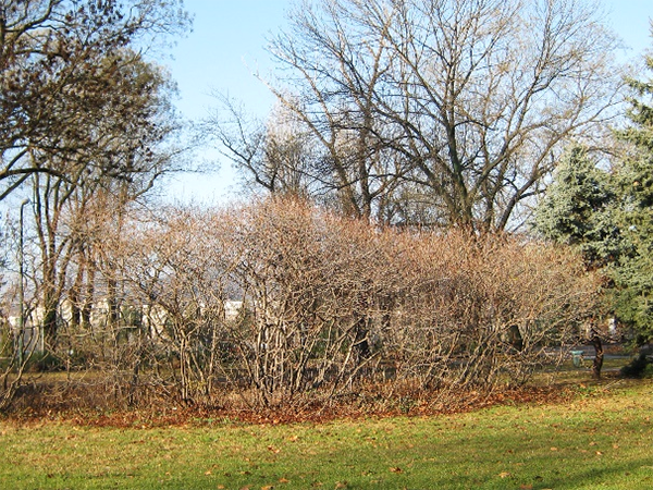 Téli nyugalomban, decemberben, 2011 (1)