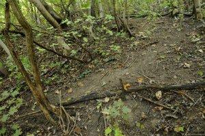 A területen nincsenek kiépített túraútvonalak, csak a vadcsapások segítik a bejárást.