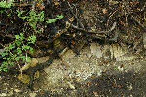 A talajréteg a terület legnagyobb részén igen sekély: a fák gyökérzete alatt sok helyen látszódik az alapkőzet.