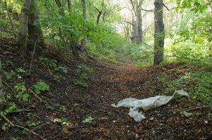 Az erdő egyes részei igen szemetesek, mely a védettség előtti illegális területhesználatokból ered.