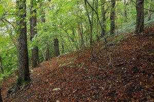 A völgyoldal alsó részén az erdő sokkal idősebb a felső területekhez képest, aljnövényzete viszont lényegesen szegényesebb. Az öreg fasorok régi emberi jelenlétre utalnak.