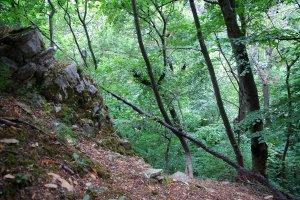 Az erdőművelés alá nem tartozó terület nyugati oldala