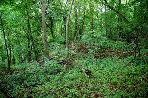 Az erdőművelés alá nem tartozó terület keleti oldala