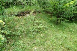 A hegy északi oldalának budai nyúlfarkfüves gyepe számos ritka növény- és állatfajnak ad otthont