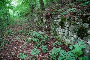A járatlan erdők egyes részein még felfedezhető az évtizedekkel ezelőtti aktív emberi jelenlét