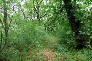A terület néhány nehezen járható ösvény hálózza be