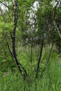 Sajnos a vandalizmus ezen az élőhelyen is jelen van: rendszeresen előfordul a növények illegális felgyújtása, melynek nyomait évekig lehet látni.