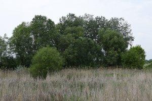 A nádas és a partvidéken található puhafás ligeterdő gazdag élővilágnak ad otthont