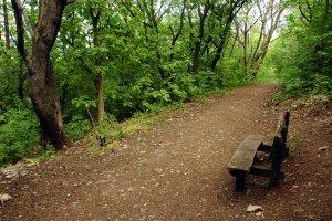 A hegy árnyas erdejében széles sétaút segíti a kényelmes bejárást