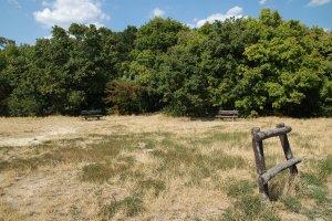 A zömmel tölgyerdőkkel borított terület gyepei a nyár végére sokszor teljesen kiszáradnak