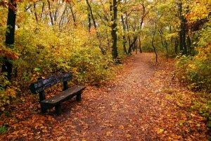 A Ferenc-hegy tölgyerdeje igen látványos az őszi hónapokban