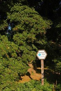 A főváros legidősebb kislevelű hársfájának védettségét tábla jelzi