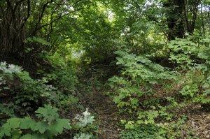 A kertben évek óta a természetes folyamtok uralkodnak.