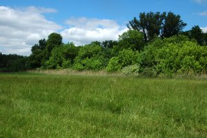 A védett terület kaszált gyepének júniusi látképe