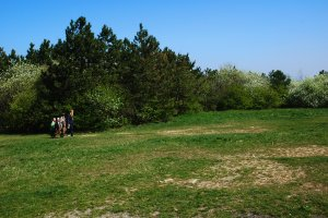 A hegy tetejének rétjét részben parkosított erdőfoltok övezik