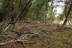 A sorsára hagyott erdőben semmiféle erdészeti tevékenység nem zajlik, mely igen jót tesz a terület élővilágának