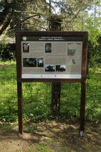 A cédrus ismert történetét és faj jellemzőit egy tábla segítségével ismerhetik meg az érdeklődők