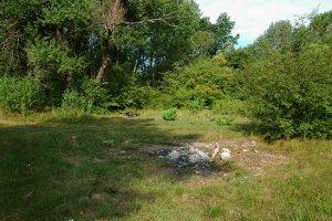 A mocsár melletti erdősebb részeken öreg nyárligetek is találhatók