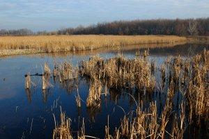 A mocsár koratavaszra rendszeresen feltelik vízzel, amennyiben elegendő őszi és téli csapadék esik