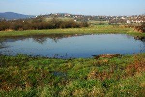 A dűlő kaszált területein minden évben megáll a víz, mely megfelelő életteret biztosít a vonuló vízimadaraknak