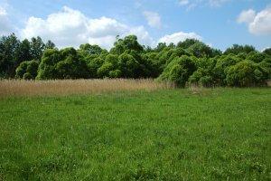 A védett terület legértékesebb élőhelyének számító Alsó-láprét