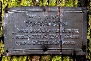Az olimpiai emléktölgy származását igazoló tábla, melyet sajnálatos módon csavarral rögzítettek a fa törzsére