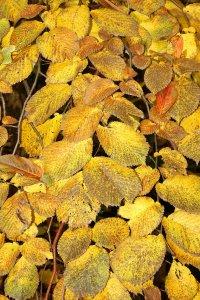 A magánkertben számos érdekes koronaformájú fa megtalálható, többek között a hegyi szil egy csüngő ágú fajtája is