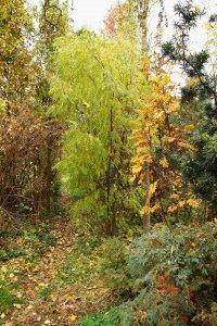 A kert keskeny ösvénye mentén található gazdag növénygyűjtemény