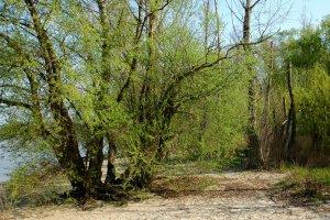 A védett terület ártéri erdeje néhol ősi állapotokat mutat