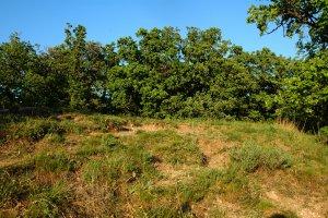 A védett terület nyugati oldalának igen értékes dolomitsziklagyepe