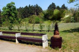 Részlet a botanikus kert telepített növényállományából