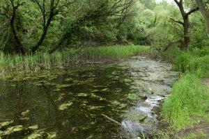 A Szilas-tó sűrű nádasai között nyílt vízfelületek is megbújnak