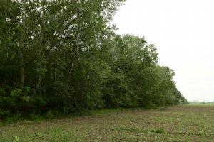 A védett területet ÉK-i oldalról szántóföldek határolják